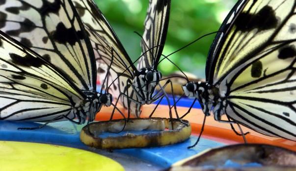 Butterfly-Park-603x349